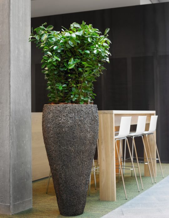 Benholm Group - Natural Planter